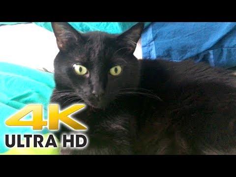 4K Feeding Cat Test