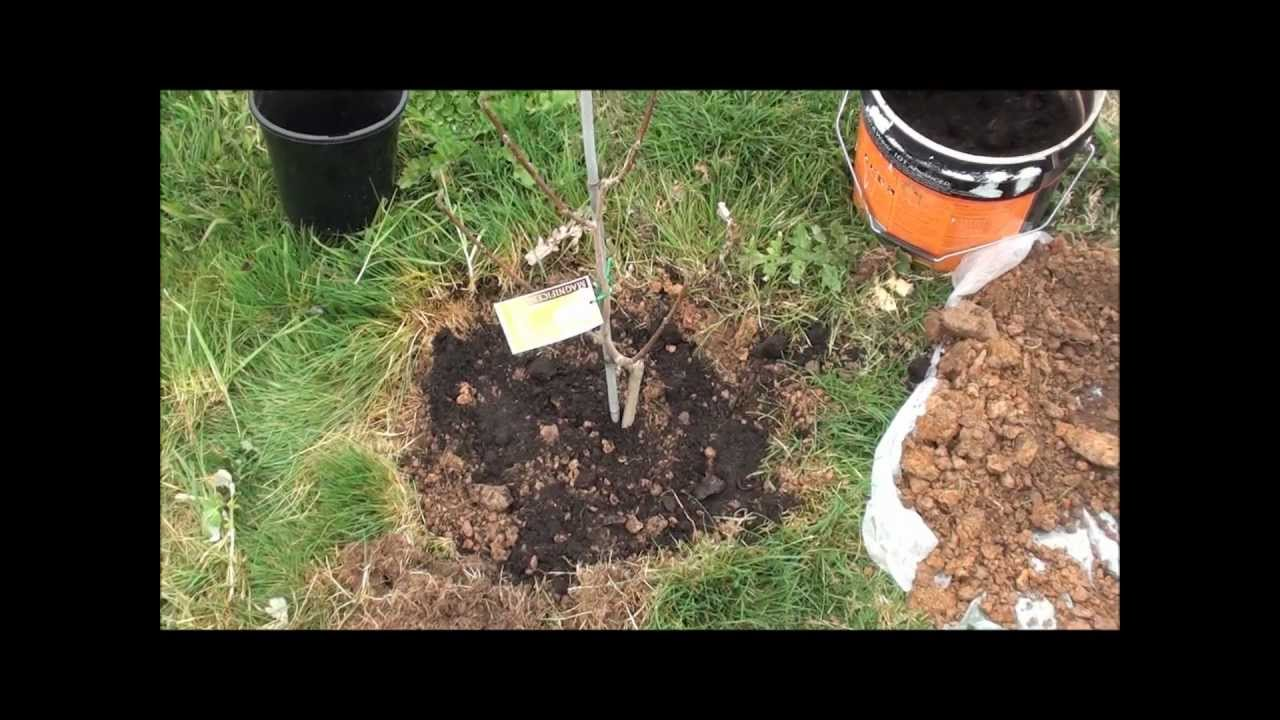 Best Way To Plant A Tree