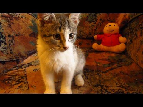 Kitten in the apartment feels happy