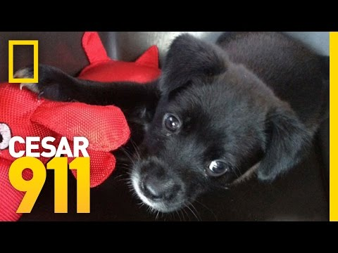 Case File: Misty | Cesar 911