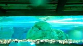 № 2336 США Яркий Мокрый Аквапарк AQUATICA Orlando Florida