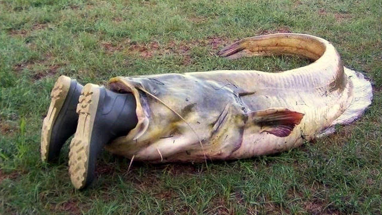 русская рыбалка 3 золотая