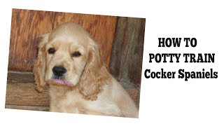 How To Potty Train Cocker Spaniels