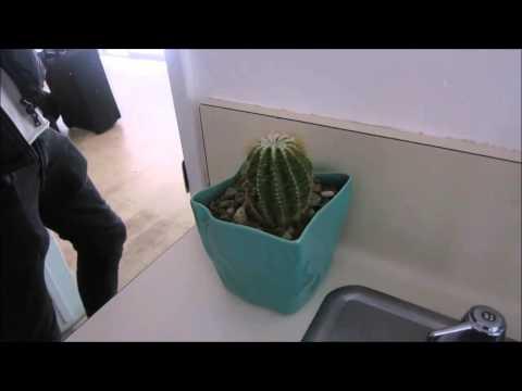 Odds on you eating cactus || Oli White & Joe Sugg - YouTube