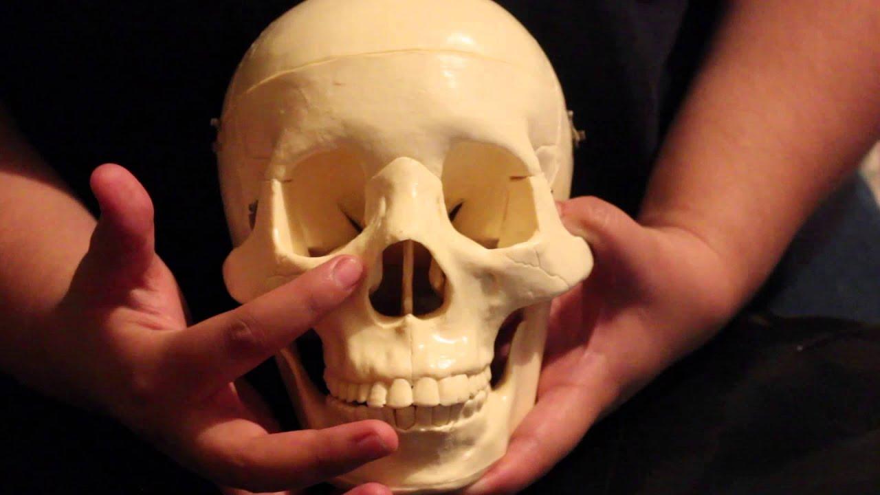 Anatomía Quirúrgica de los Maxilares y Tejidos Blandos - YouTube
