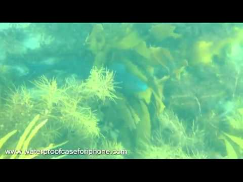Diving With My InnoPocket Amphibian Waterproof Iphone Case In Australia