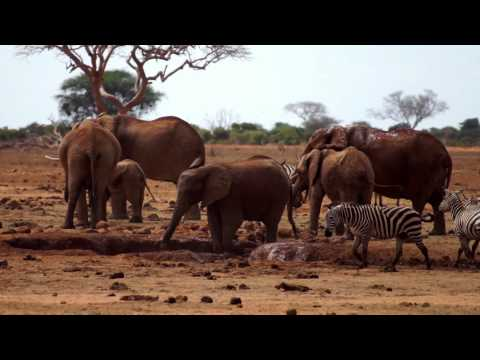 Tsavo East National Park - Kenya - September 2011 HD