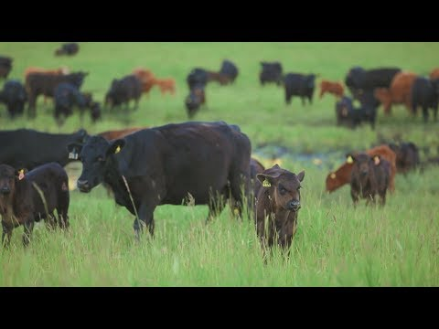 What beef producers need to know about environmental footprint
