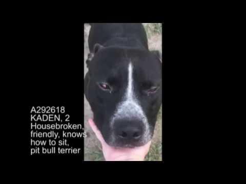 Shelter pets for adoption
