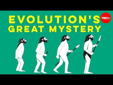 Video image: Evolution's great mystery: Language - Michael Corballis