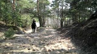 Galopem przez las