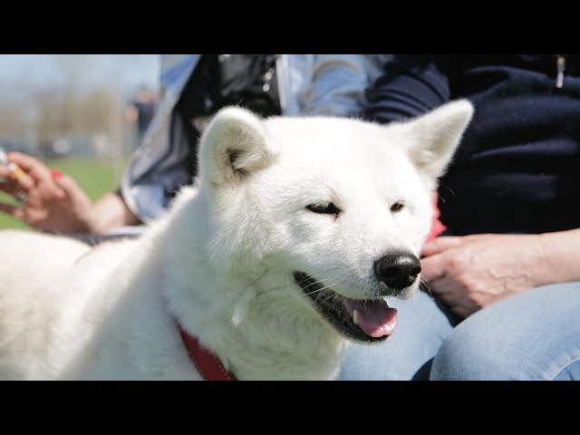 Centro Cinofilo F.D.Center-Educazione ed Addestramento Cani- Sport cinofili-Disc Dog-Rally-o-Agility