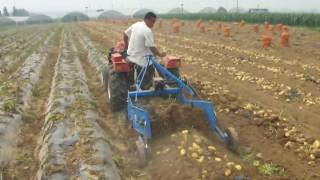 Potato harvester 4U 650 work video