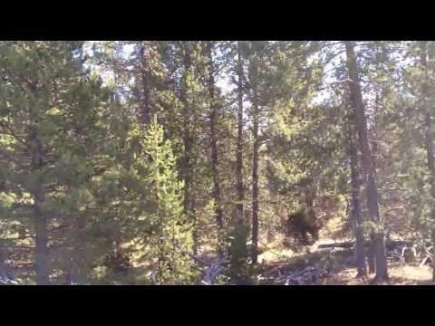 Yellowstone Noise