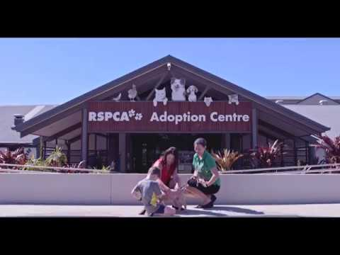 RSPCA Queensland | Griffith Adoption Ad