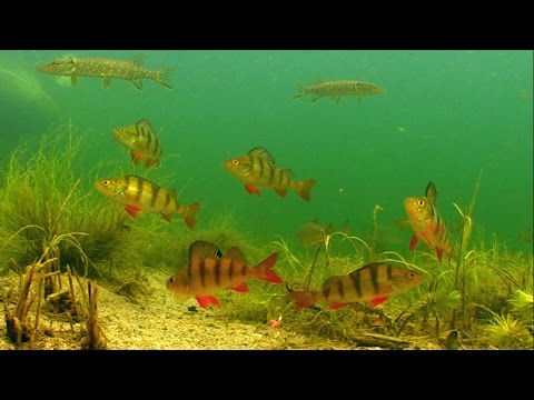 Fishing Wt Mormyshka For Perch, Roach, Rudd. Underwater Camera. Рыбалка: плотва, окунь и мормышка