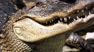 Top 10 Najnebezpečnejších Zvierat Sveta