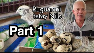 Puguan ni tatay Nilo Quail Farming in Rosario Batangas Philippines
