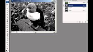 Видеоуроки Фотошоп 1 - 27 Палитра Каналы