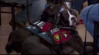 Northwest Battle Buddies on television in Portland | 5/30/16