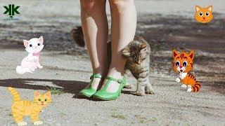 Kediler neden sürtünür