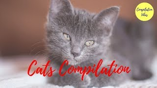 Cats compilation 😻 Funny cats compilation 😻 Cute cats compilation
