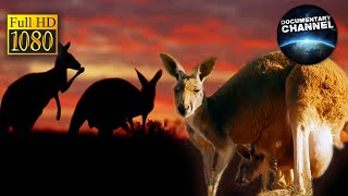 AUSTRALIA seria IMAX, cały film HD