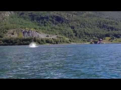 Springere på jakt i Burfjord