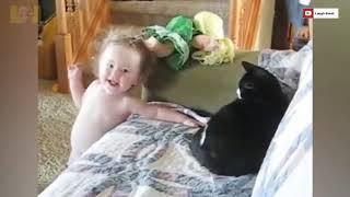 Шутки и приколы с котами. Веселые дети. Смешные коты. Смешные кошки.