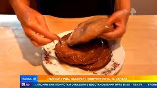 Чайный гриб набирает популярность на Западе