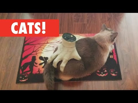Cats!