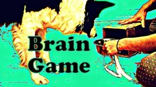 Problem Solving Game - Advanced brain game for your dog