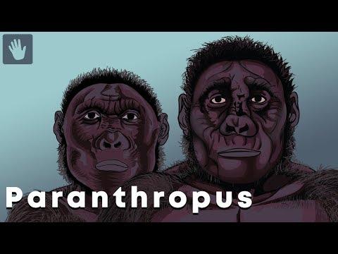 Paranthropus Evolution