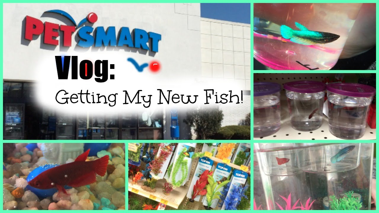 Petsmart vlog getting my new fish doovi for How much are fish at petsmart