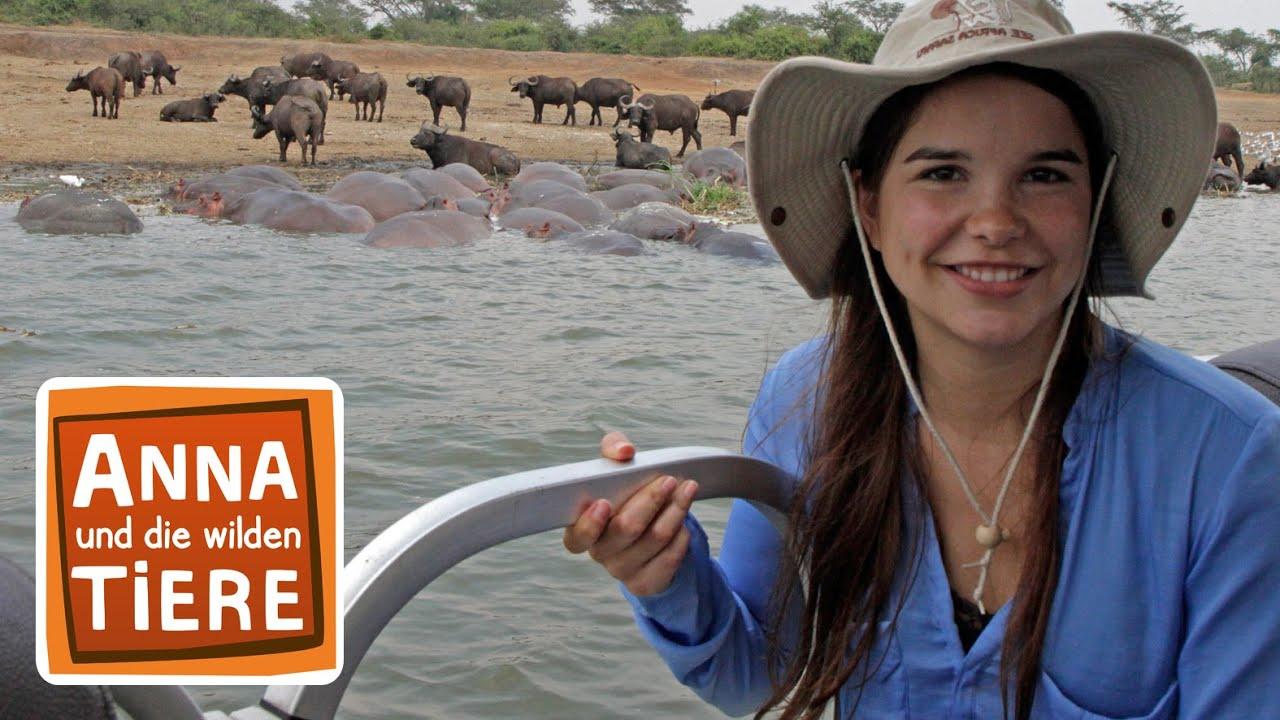 Ein Fluss Voller Flusspferde Doku Reportage Fur Kinder Anna Und Die Wilden Tiere Youtube