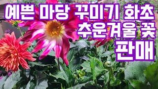 야생화 다년생 노지월동식물 전원생활 베란다화초 가드닝 …