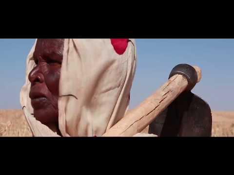 Sudan: Water Harvesting