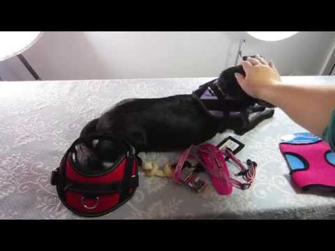 teaser:-dog-harness-reviews,-coming-soon!