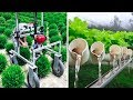 - INGENIOUS AGRICULTURAL IDEAS AND INVENTIONS FOR MAXIMUM PRODUCTIVITY