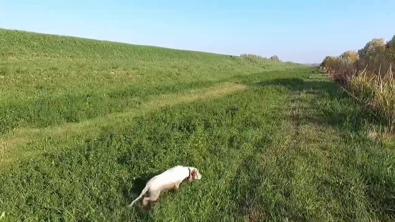 Caccia col cane da ferma 2020 - Capitano anche giornate così