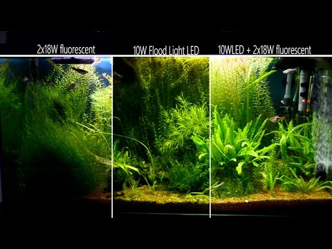 2x 18W Fluo Vs. 10W Led - In Freshwater Tropical Aquarium