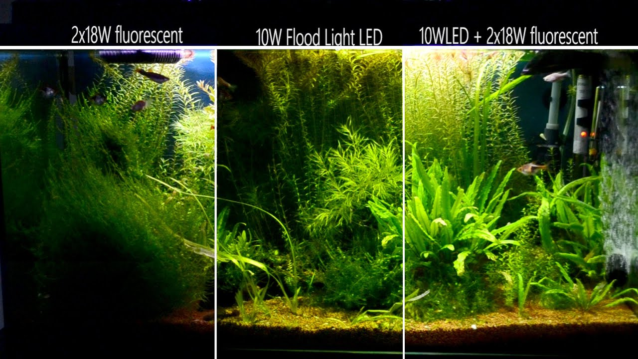 2x 18w fluo vs 10w led in freshwater tropical aquarium