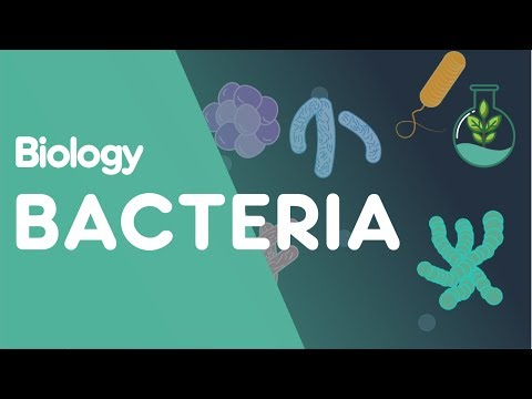 Structure of Bacteria | Biology for All | FuseSchool