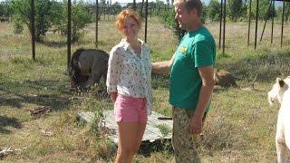 парк львов тайган часть 2(В Крыму есть замечательный парк львов Тайган, где вы можете не только проехать по сафари и наблюдать за..., 2015-07-20T12:53:14.000Z)