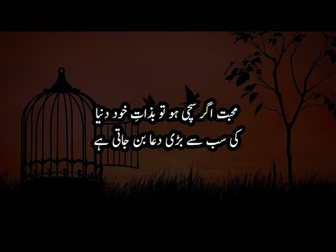 Sachi Mohabbat Kia hai? Urdu Quotes about True Love | Pyar | Ishq | Laila Ayat Ahmad