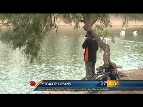 Las Noticias - Pescador urbano saca sus peces del Parque Lago Monterrey