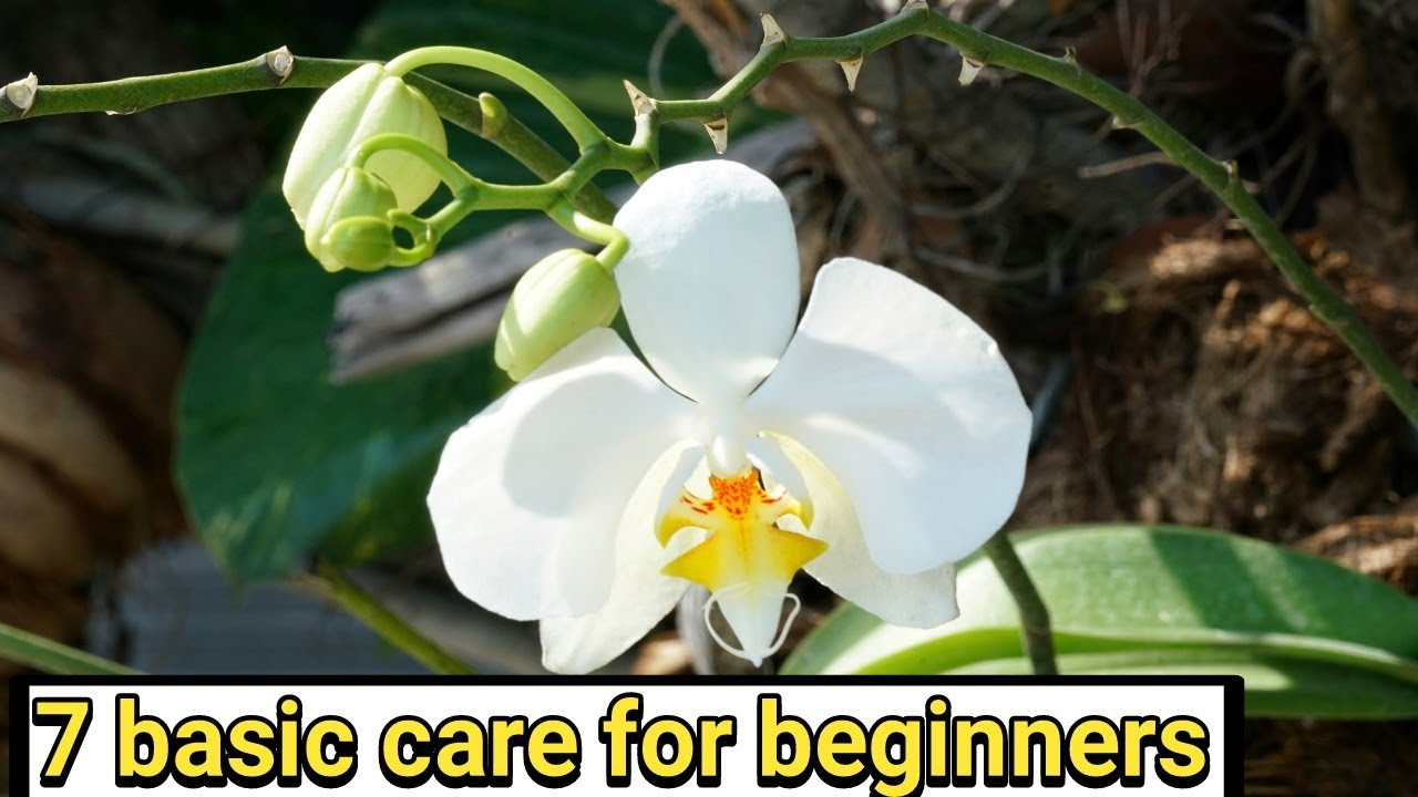 7 Basic Care Of Orchid Plant In Hindi Tech Garden Youtube