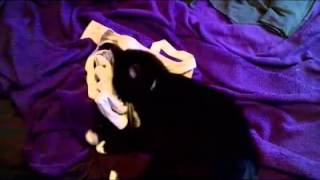 Tobi cat loves bras(, 2016-01-06T04:35:12.000Z)