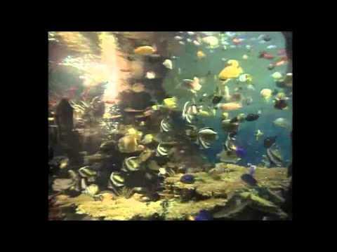 Seven Seas Of Rhye - Queen (Karaoke Cover)
