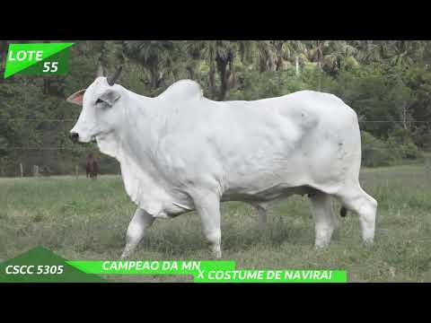 LOTE 55